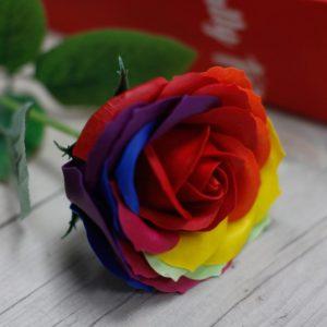 Såperose i regnbuens farger