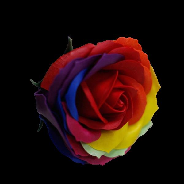 saaperose rainbow47800 nobg